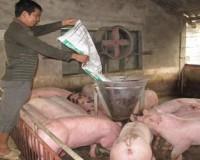 Thị trường chăn nuôi: Không thể để một nhóm bóc lột cả triệu người
