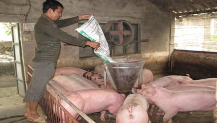 Ngành chăn nuôi đang chịu sức ép rất lớn từ thịt lợn ngoại giá rẻ. Ảnh: Thanh Xuân.